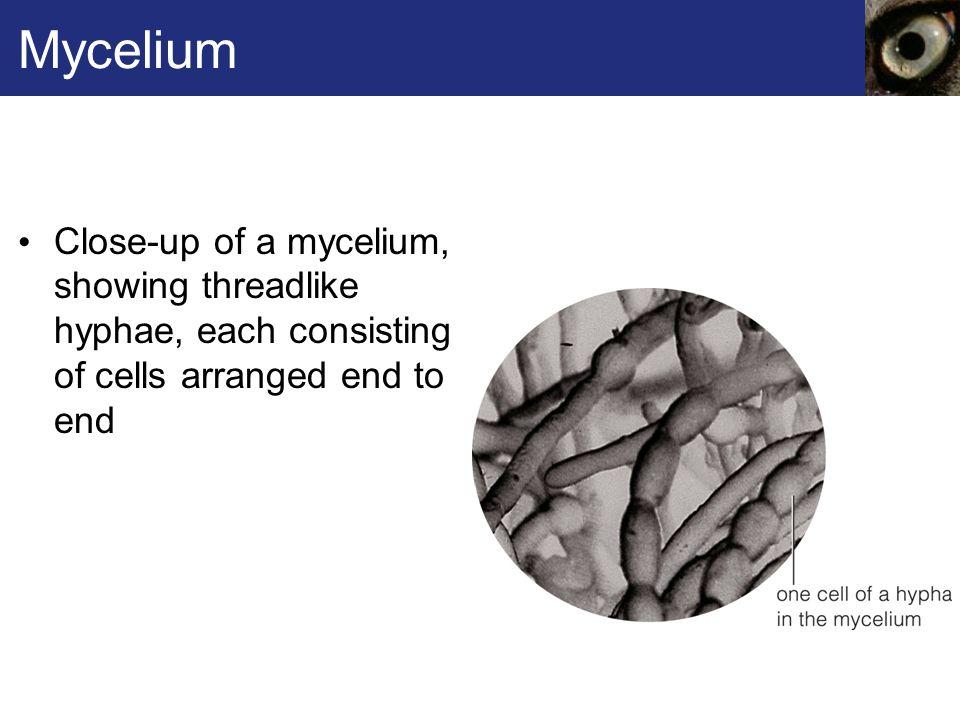 Club Fungus Life Cycle 1.
