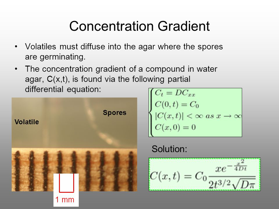 Concentration Gradient Volatiles must diffuse into the agar where the spores are germinating. The concentration gradient of a compound in water agar,