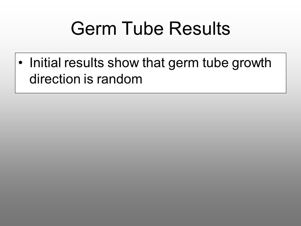 Germ Tube Results Initial results show that germ tube growth direction is random