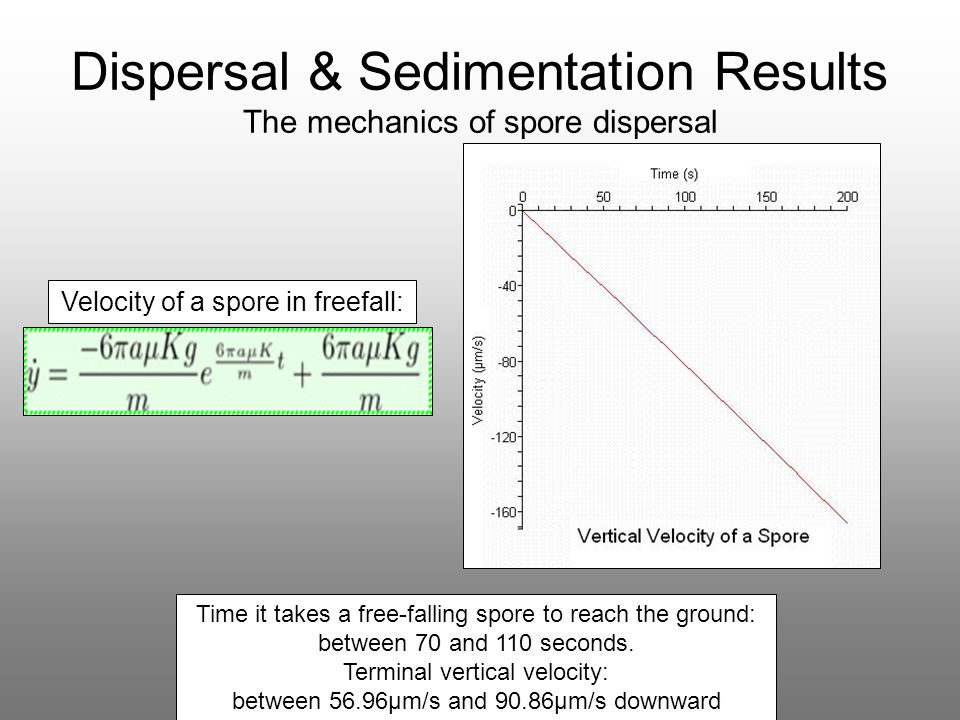 Time it takes a free-falling spore to reach the ground: between 70 and 110 seconds. Terminal vertical velocity: between 56.96μm/s and 90.86μm/s downwa