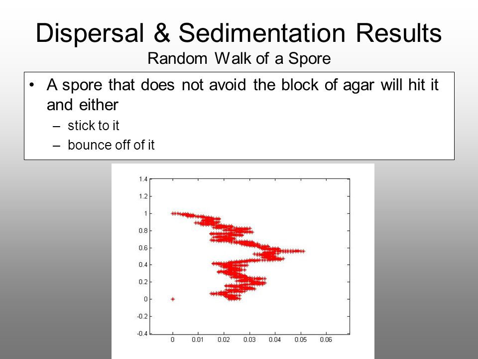 Dispersal & Sedimentation Results Random Walk of a Spore A spore that does not avoid the block of agar will hit it and either –stick to it –bounce off