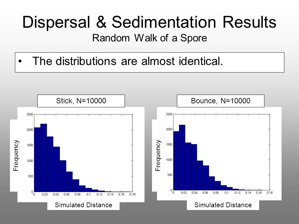 Dispersal & Sedimentation Results Random Walk of a Spore The distributions are almost identical. Stick, N=10000Bounce, N=10000 Simulated Distance Freq