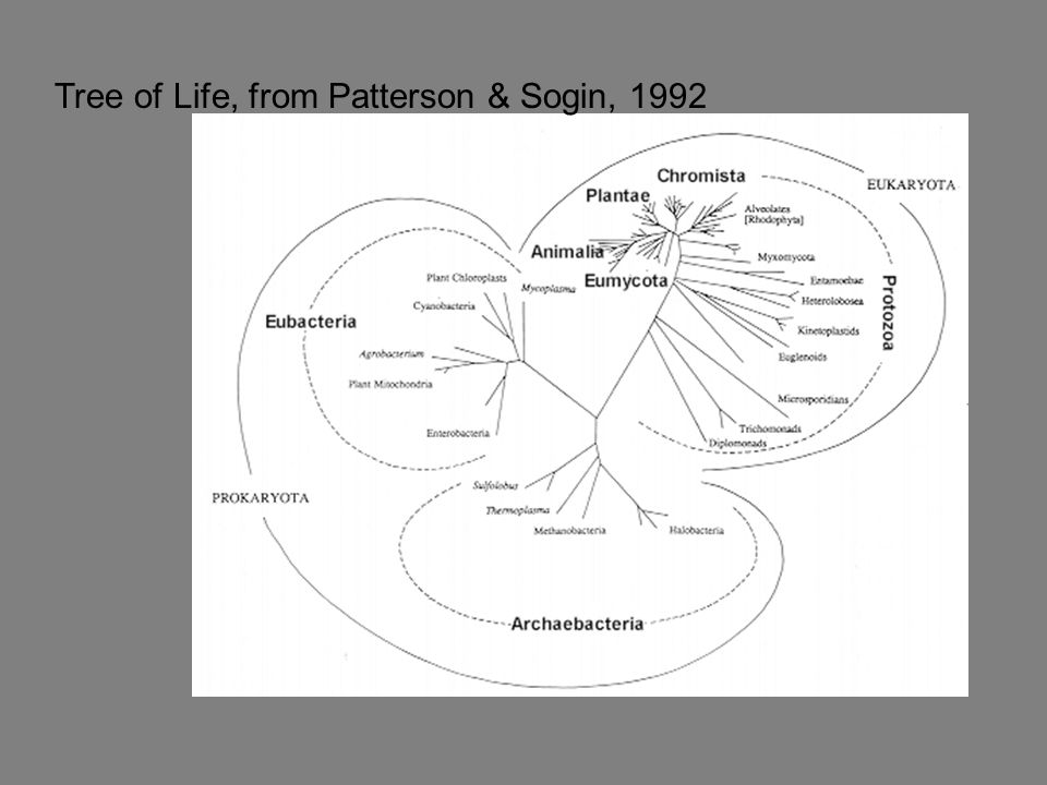 Tree of Life, from Patterson & Sogin, 1992
