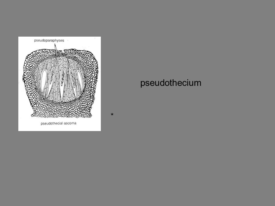 pseudothecium *