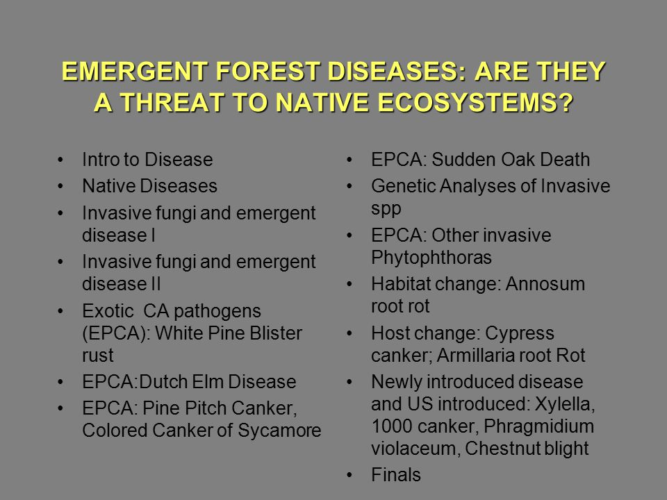 EMERGENT FOREST DISEASES: ARE THEY A THREAT TO NATIVE ECOSYSTEMS? Matteo Garbelotto U.C.Berkeley