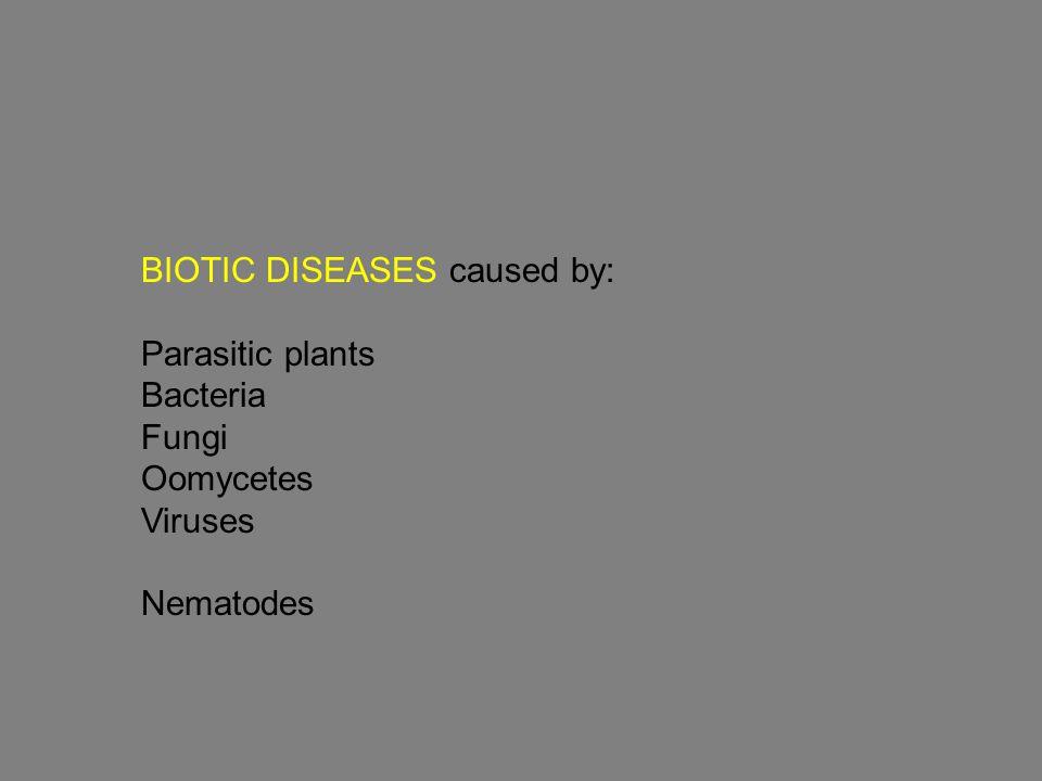 Oomycetes (Div. Oomycota) Kingdom: straminopila (prev. Chromista)