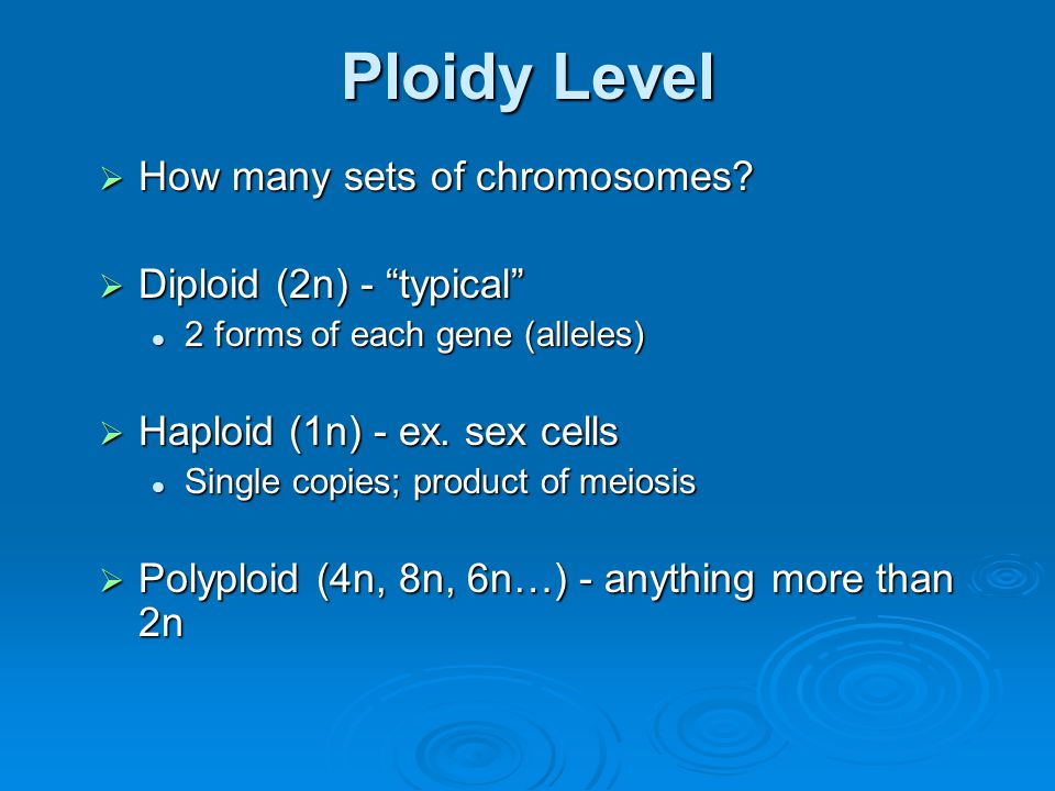 """Ploidy Level  How many sets of chromosomes?  Diploid (2n) - """"typical"""" 2 forms of each gene (alleles) 2 forms of each gene (alleles)  Haploid (1n) -"""