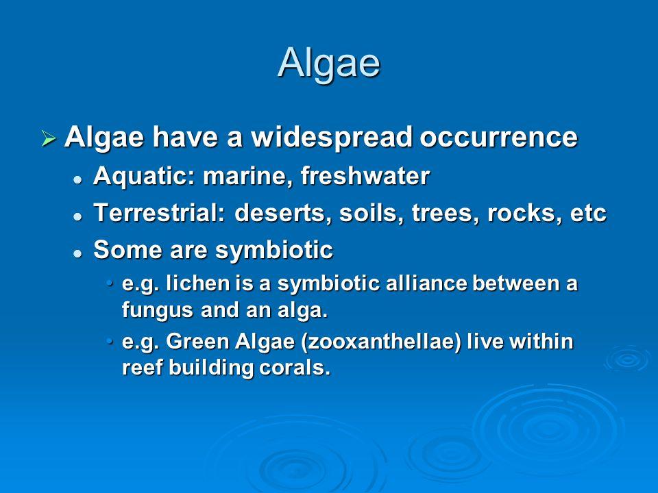 Algae  Algae have a widespread occurrence Aquatic: marine, freshwater Aquatic: marine, freshwater Terrestrial: deserts, soils, trees, rocks, etc Terr