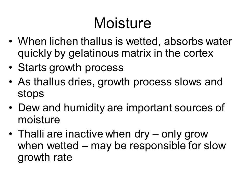 Moisture When lichen thallus is wetted, absorbs water quickly by gelatinous matrix in the cortex Starts growth process As thallus dries, growth process slows and stops Dew and humidity are important sources of moisture Thalli are inactive when dry – only grow when wetted – may be responsible for slow growth rate