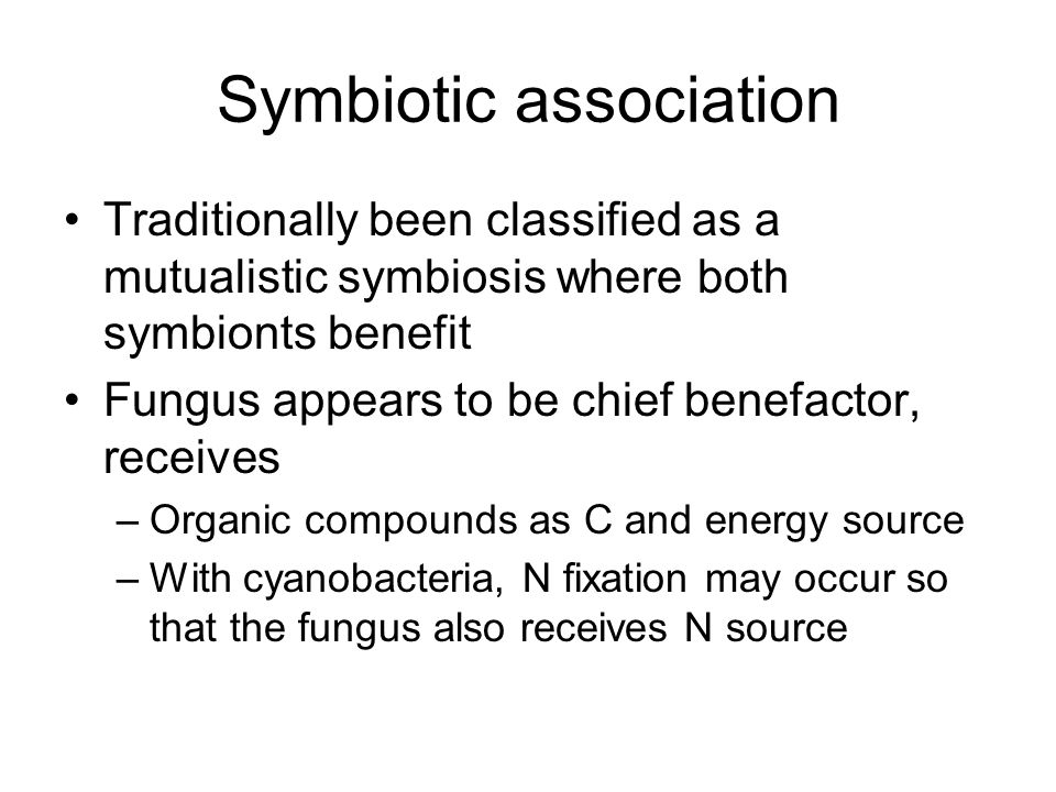 Symbiotic association Traditionally been classified as a mutualistic symbiosis where both symbionts benefit Fungus appears to be chief benefactor, receives –Organic compounds as C and energy source –With cyanobacteria, N fixation may occur so that the fungus also receives N source