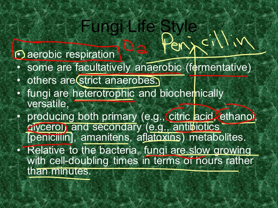 Fungi Life Style aerobic respiration some are facultatively anaerobic (fermentative) others are strict anaerobes. fungi are heterotrophic and biochemi