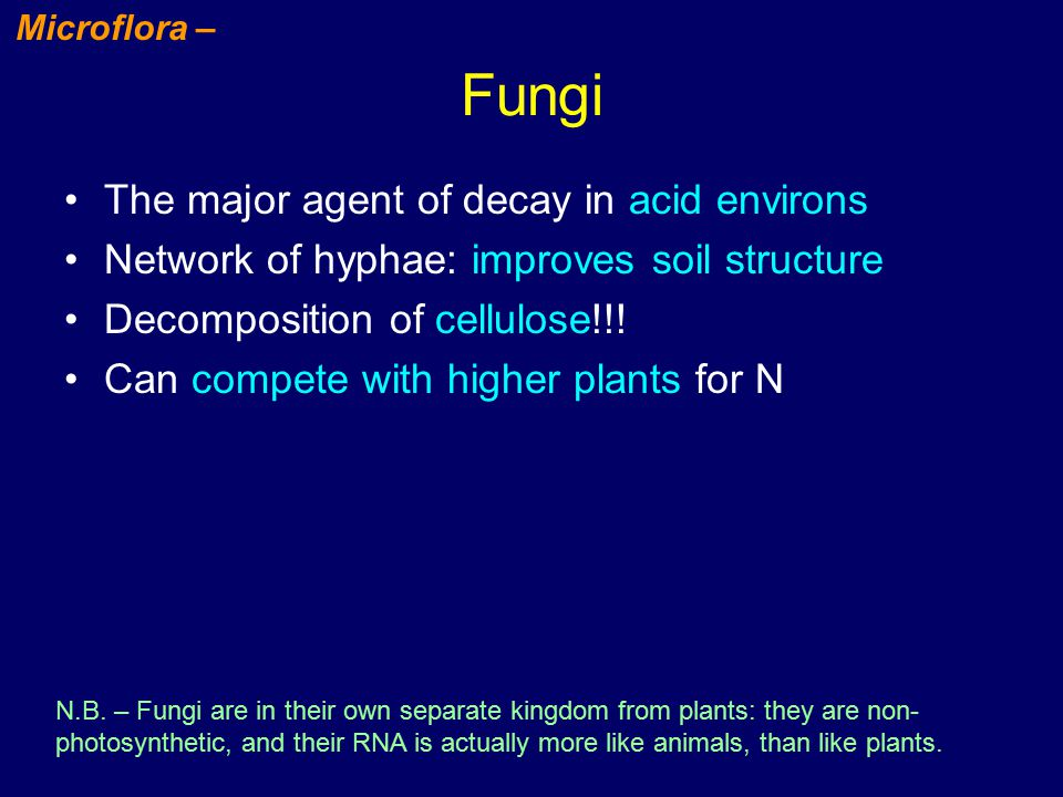 Fungi The major agent of decay in acid environs Network of hyphae: improves soil structure Decomposition of cellulose!!.