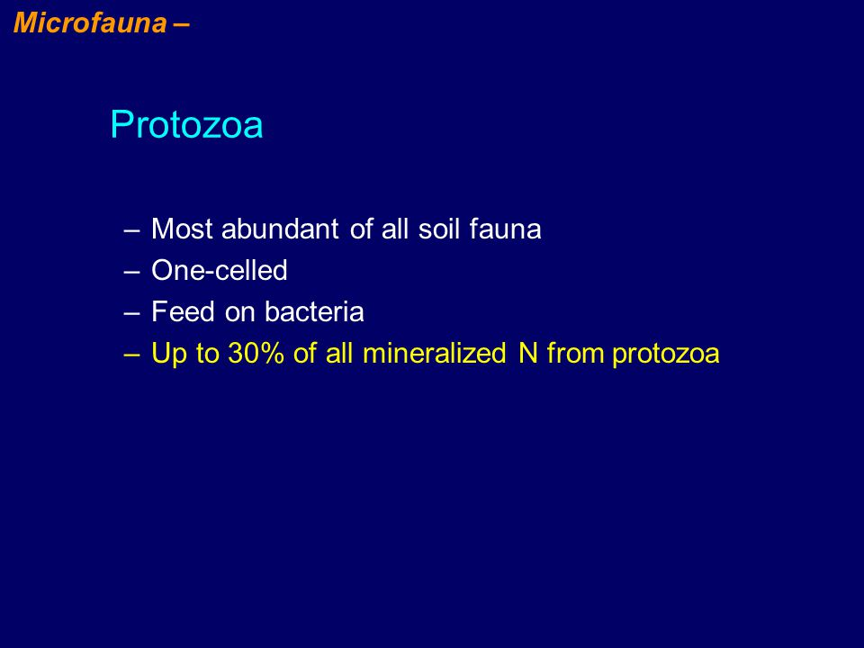 –Most abundant of all soil fauna –One-celled –Feed on bacteria –Up to 30% of all mineralized N from protozoa Protozoa Microfauna –