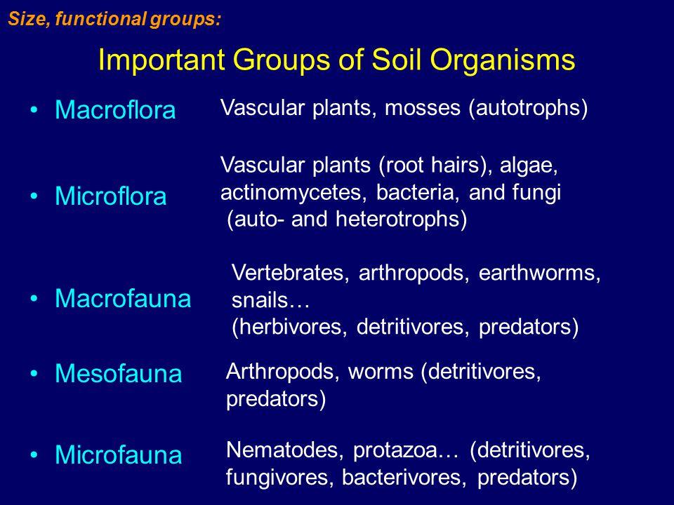 Important Groups of Soil Organisms Macroflora Microflora Macrofauna Vascular plants, mosses (autotrophs) Vascular plants (root hairs), algae, actinomy