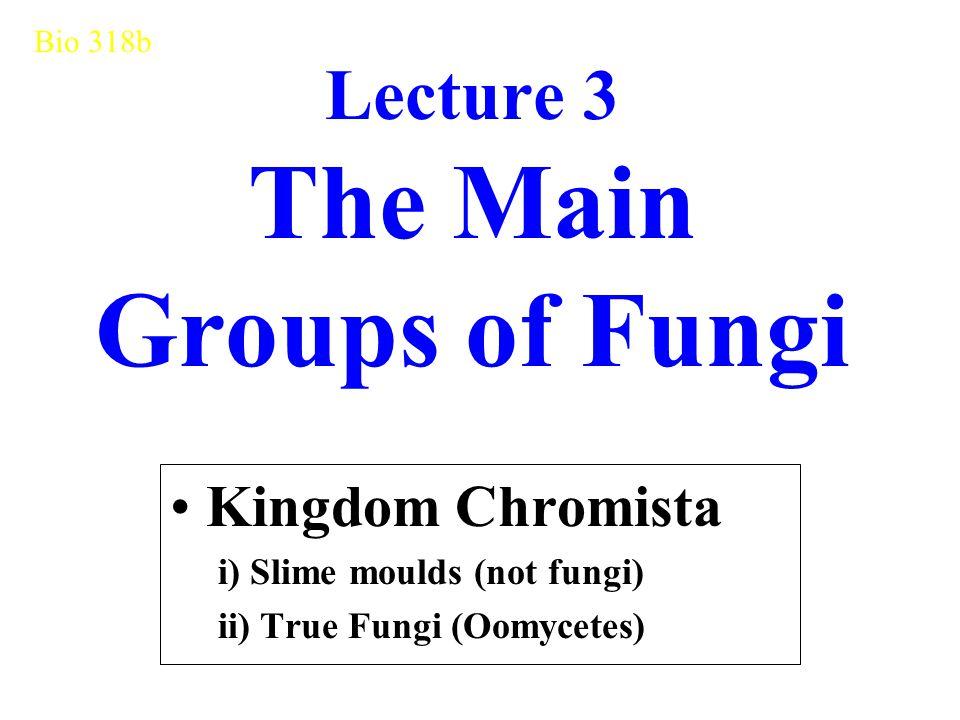 Lecture 3 The Main Groups of Fungi Kingdom Chromista i) Slime moulds (not fungi) ii) True Fungi (Oomycetes) Bio 318b