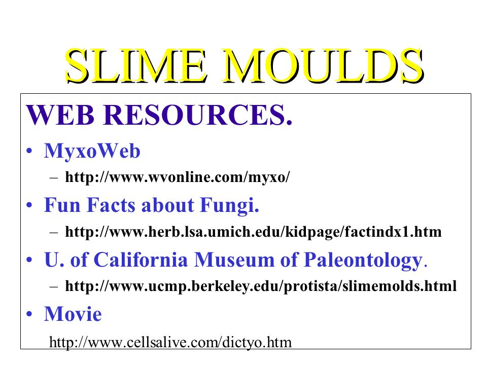SLIME MOULDS WEB RESOURCES. MyxoWeb –http://www.wvonline.com/myxo/ Fun Facts about Fungi. –http://www.herb.lsa.umich.edu/kidpage/factindx1.htm U. of C