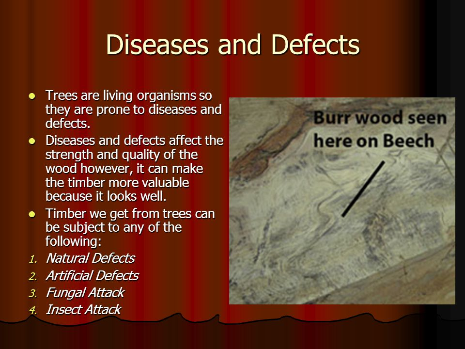 Diseases and Defects Trees are living organisms so they are prone to diseases and defects. Trees are living organisms so they are prone to diseases an