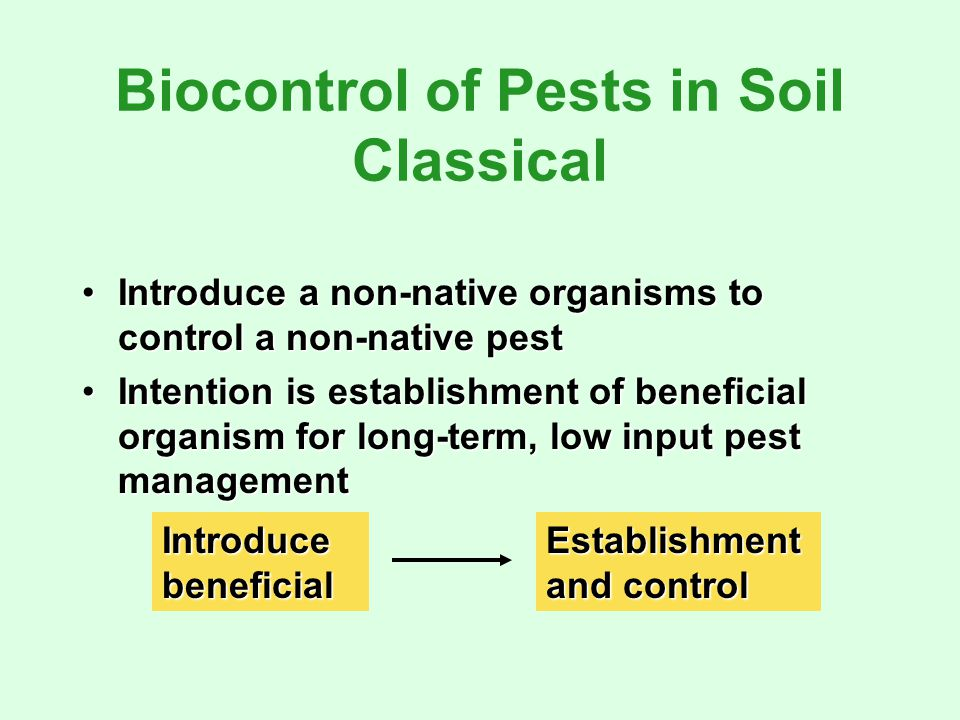 Biocontrol of Pests in Soil Classical Introduce a non-native organisms to control a non-native pestIntroduce a non-native organisms to control a non-native pest Intention is establishment of beneficial organism for long-term, low input pest managementIntention is establishment of beneficial organism for long-term, low input pest management IntroducebeneficialEstablishment and control