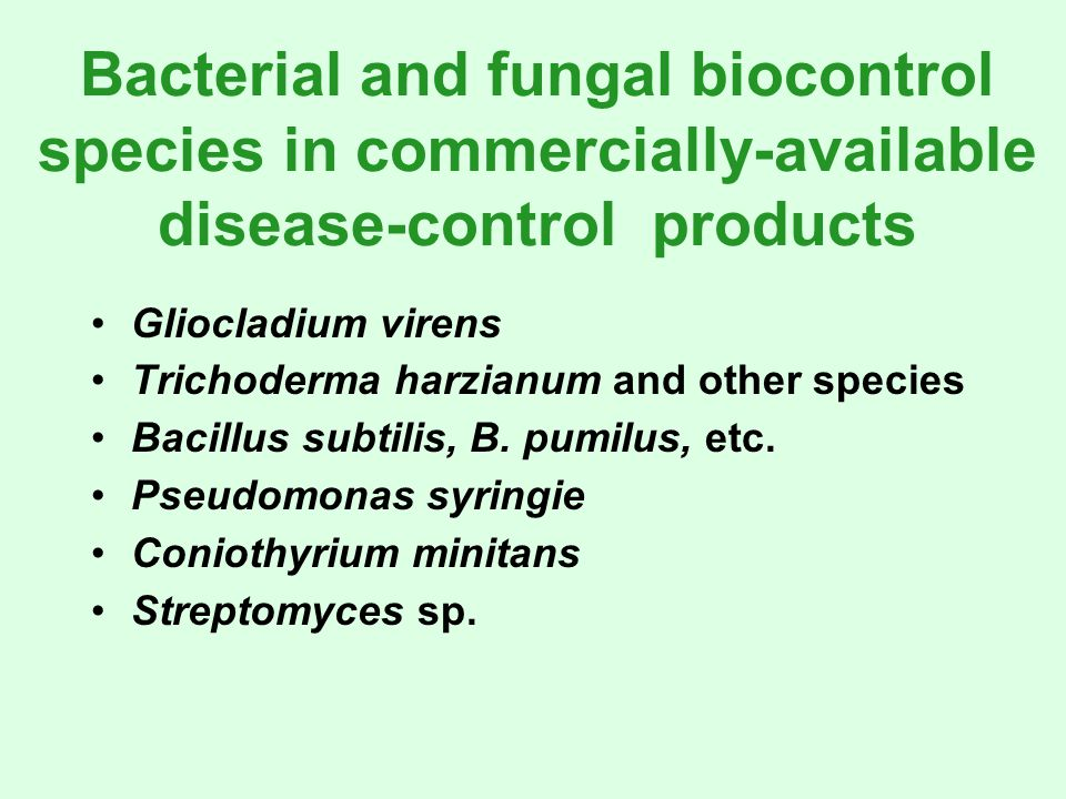 Bacterial and fungal biocontrol species in commercially-available disease-control products Gliocladium virens Trichoderma harzianum and other species Bacillus subtilis, B.