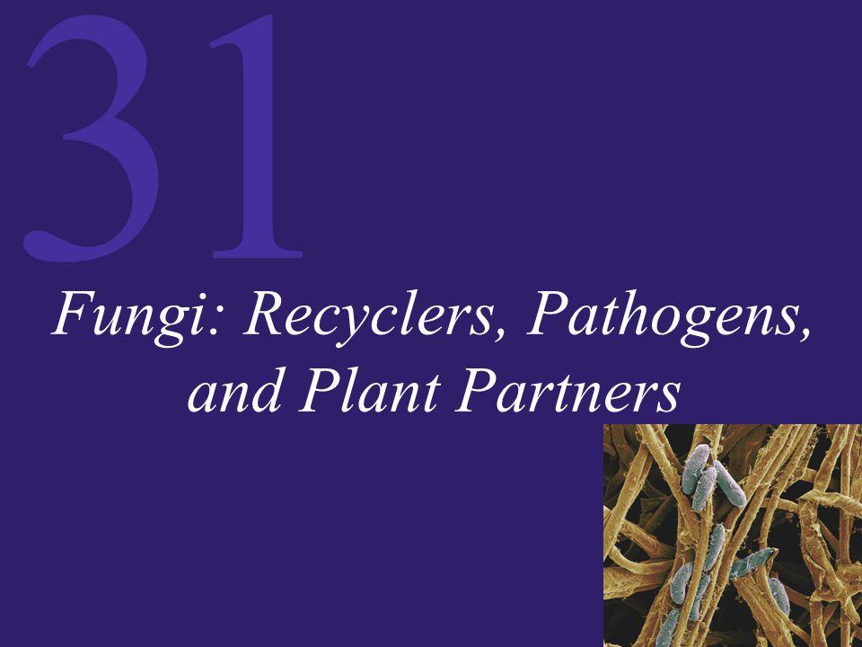 Figure 31.18 Lichen Anatomy (Part 2)