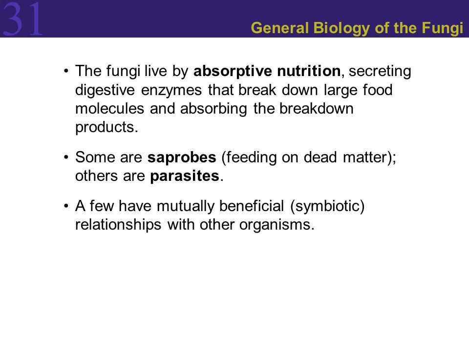 Figure 31.16 Mycorrhizal Associations