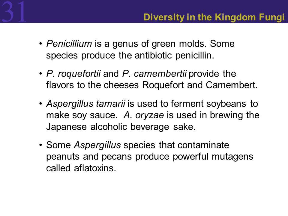 31 Diversity in the Kingdom Fungi Penicillium is a genus of green molds. Some species produce the antibiotic penicillin. P. roquefortii and P. camembe