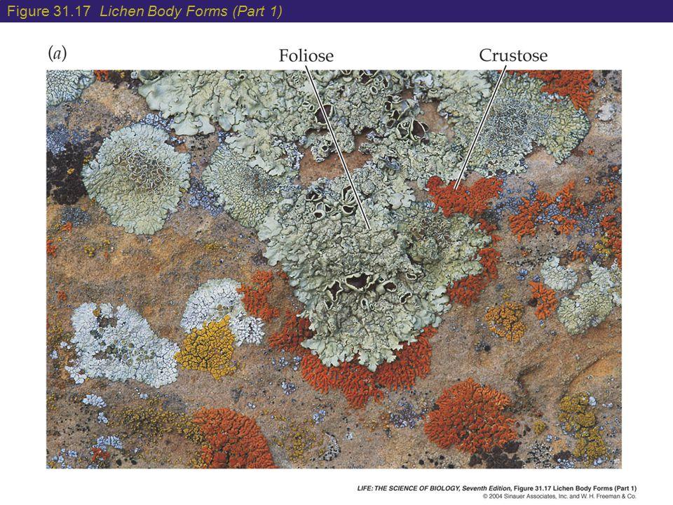 Figure 31.17 Lichen Body Forms (Part 1)