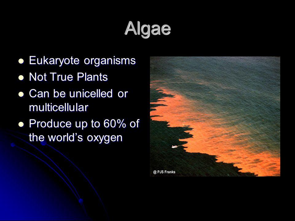Algae Eukaryote organisms Eukaryote organisms Not True Plants Not True Plants Can be unicelled or multicellular Can be unicelled or multicellular Prod