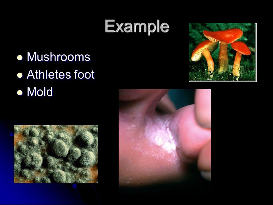 Example Mushrooms Mushrooms Athletes foot Athletes foot Mold Mold