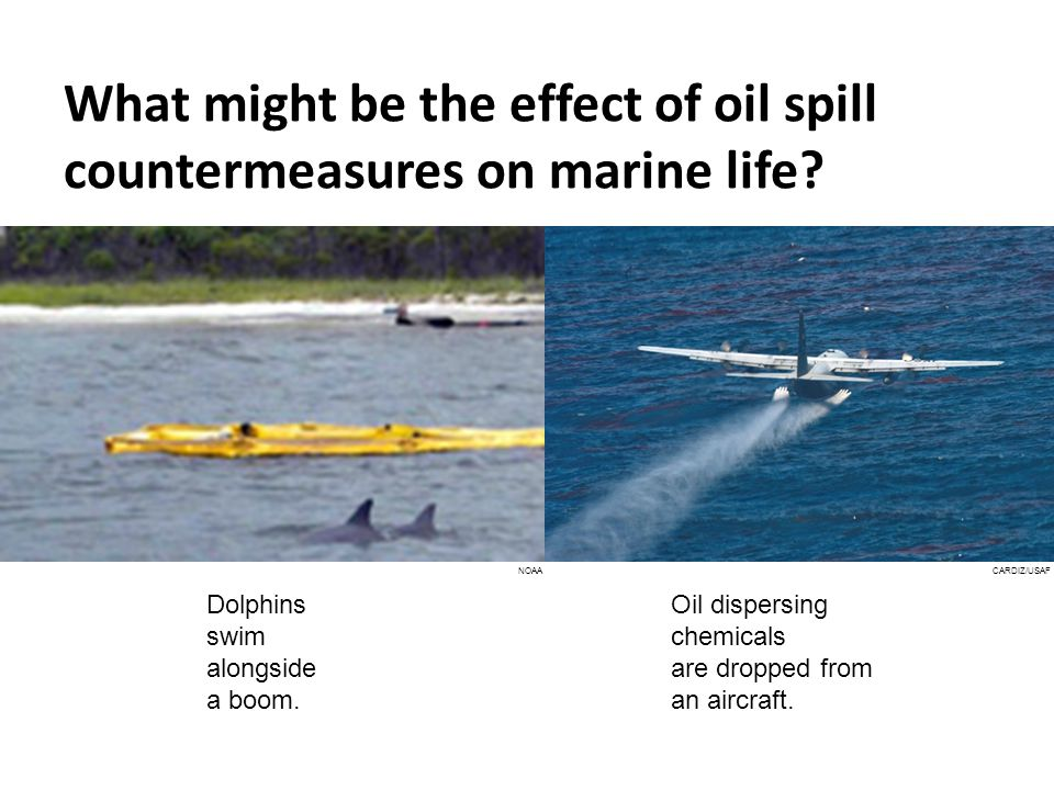 What might be the effect of oil spill countermeasures on marine life.