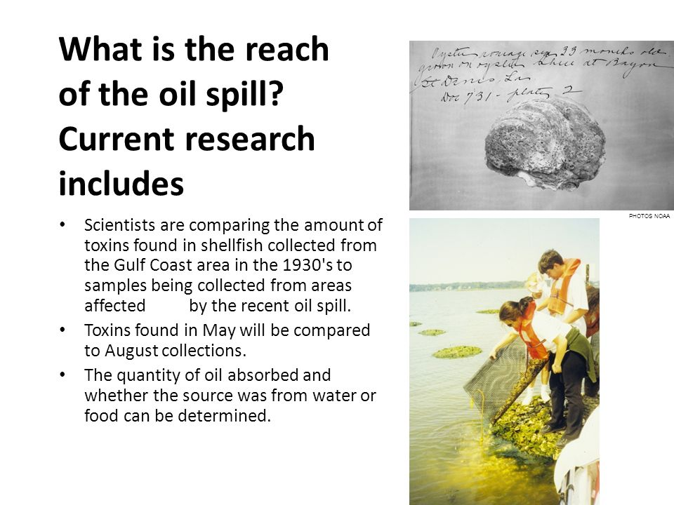 What is the reach of the oil spill? Current research includes Scientists are comparing the amount of toxins found in shellfish collected from the Gulf