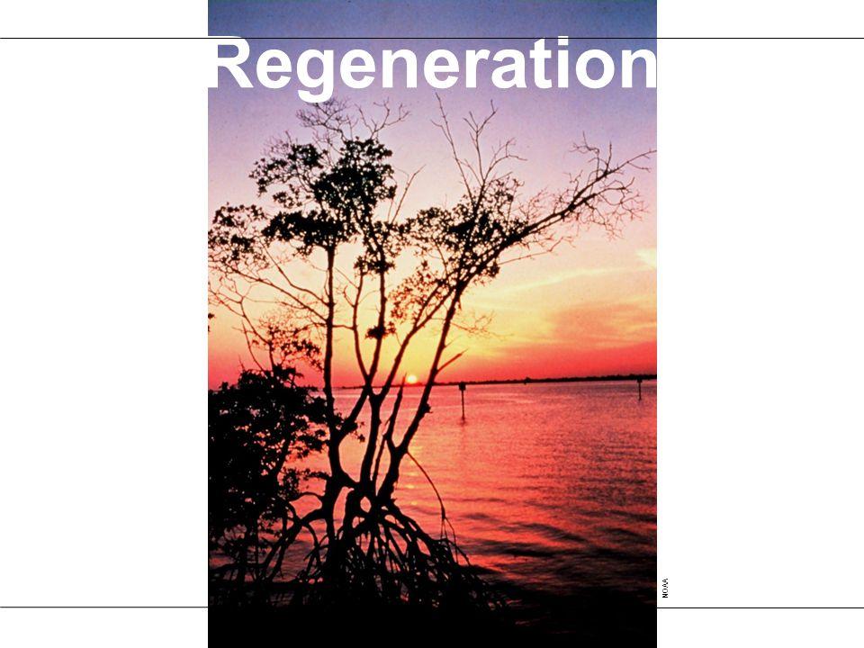 Regeneration NOAA