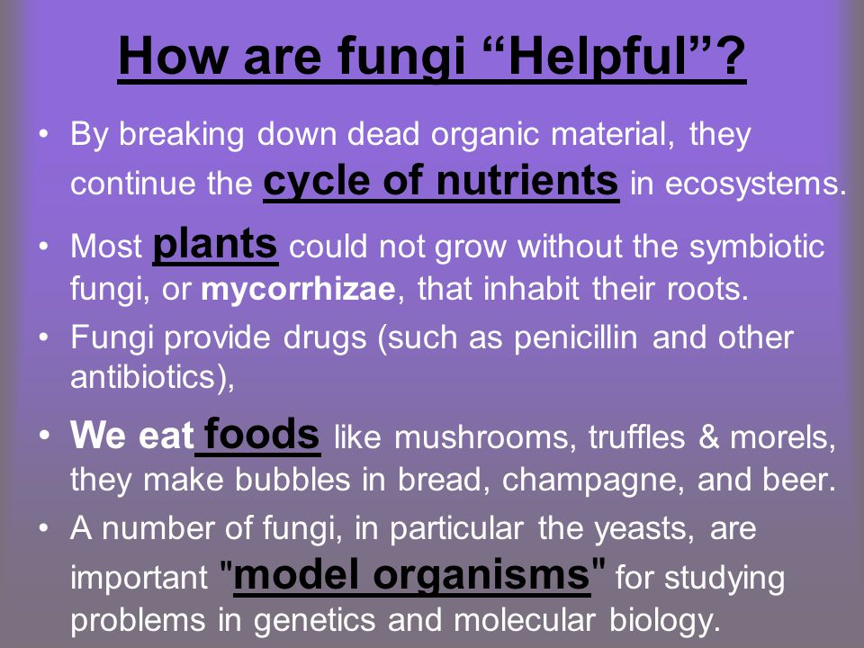 How are fungi Helpful .