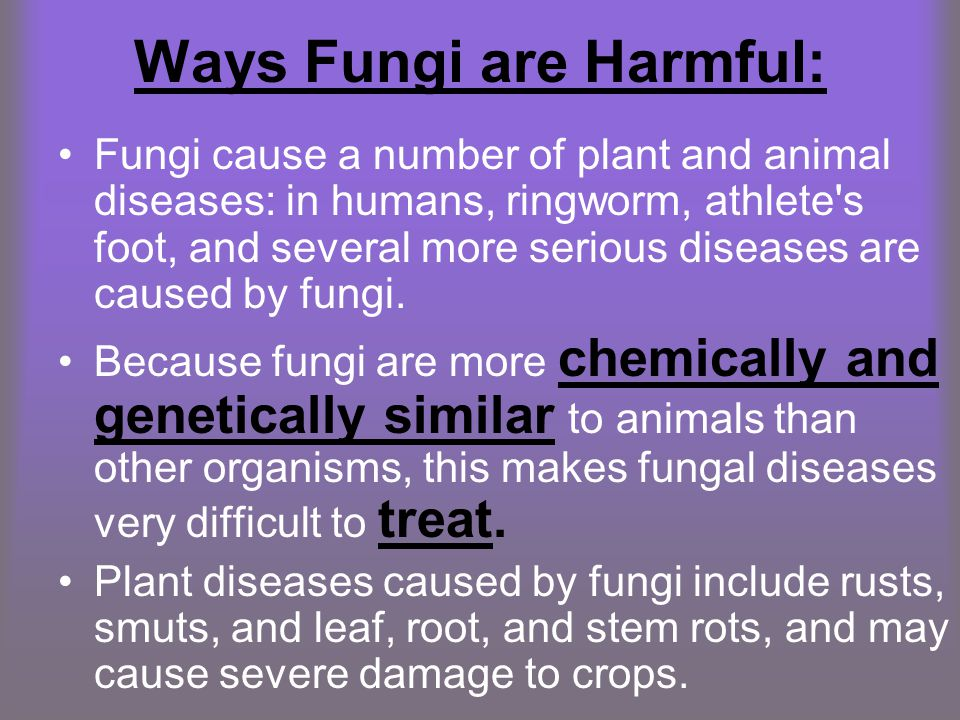 Ways Fungi are Harmful: Fungi cause a number of plant and animal diseases: in humans, ringworm, athlete's foot, and several more serious diseases are