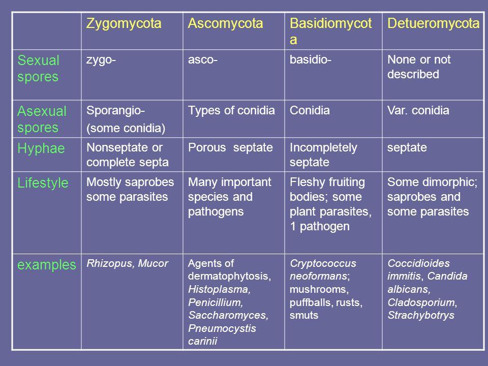 ZygomycotaAscomycotaBasidiomycot a Detueromycota Sexual spores zygo-asco-basidio-None or not described Asexual spores Sporangio- (some conidia) Types