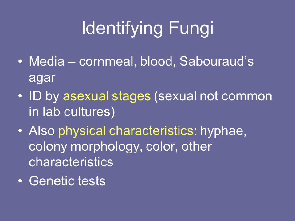 Identifying Fungi Media – cornmeal, blood, Sabouraud's agar ID by asexual stages (sexual not common in lab cultures) Also physical characteristics: hyphae, colony morphology, color, other characteristics Genetic tests