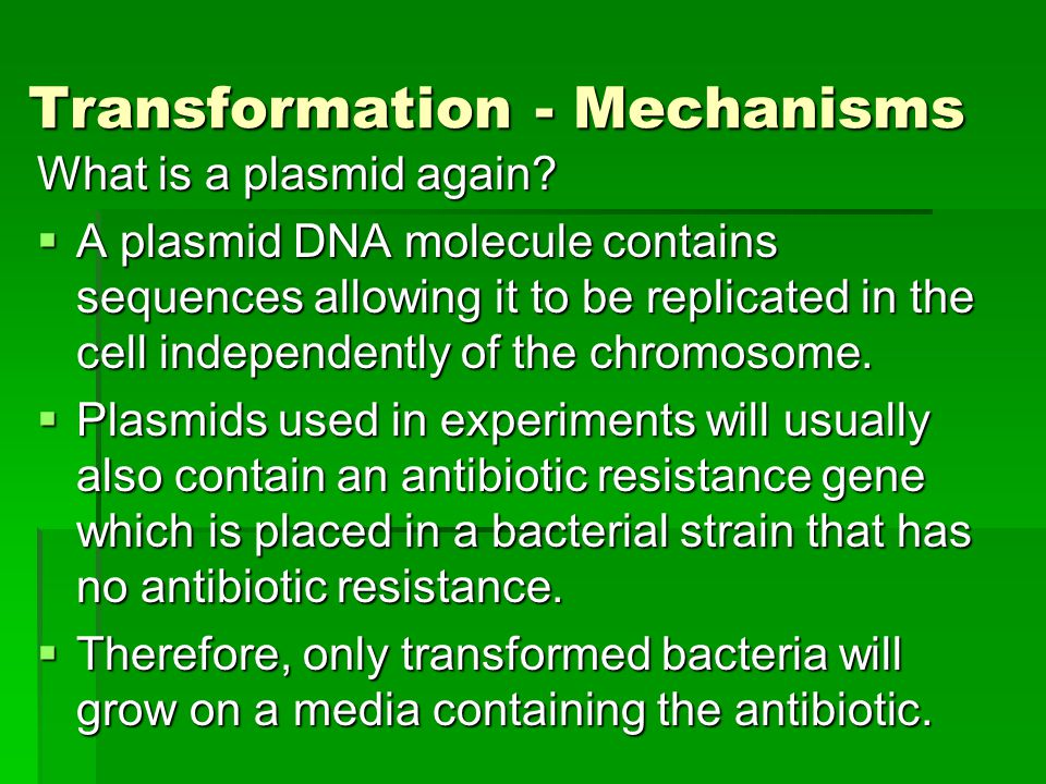Transformation - Mechanisms What is a plasmid again.