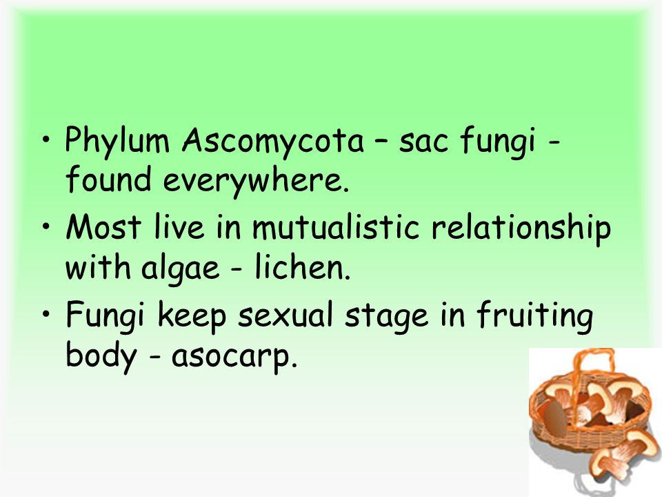 Phylum Ascomycota – sac fungi - found everywhere.