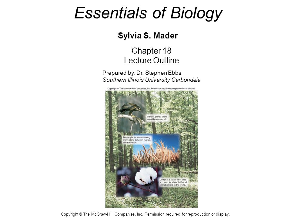 Essentials of Biology Sylvia S. Mader Chapter 18 Lecture Outline Prepared by: Dr. Stephen Ebbs Southern Illinois University Carbondale Copyright © The