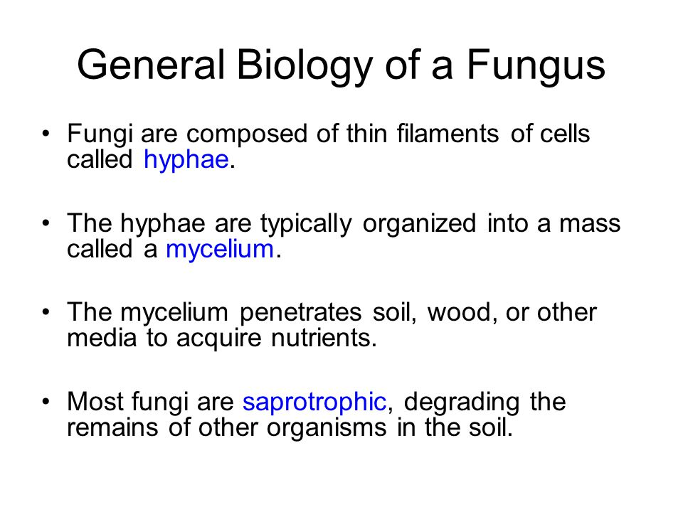General Biology of a Fungus Fungi are composed of thin filaments of cells called hyphae. The hyphae are typically organized into a mass called a mycel