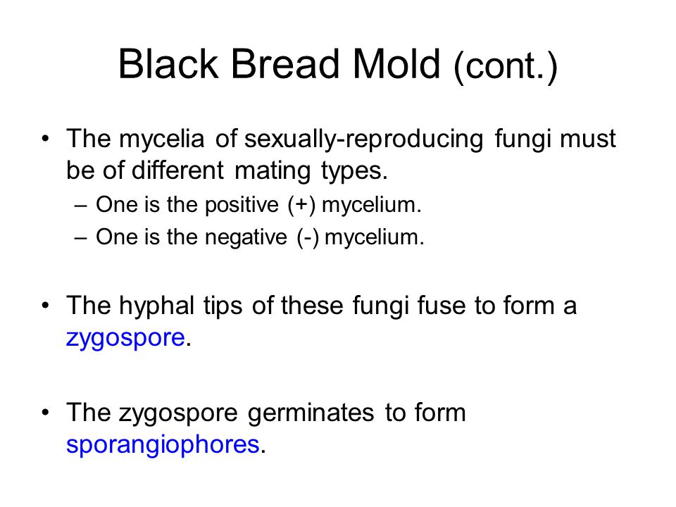 Black Bread Mold (cont.) The mycelia of sexually-reproducing fungi must be of different mating types. –One is the positive (+) mycelium. –One is the n
