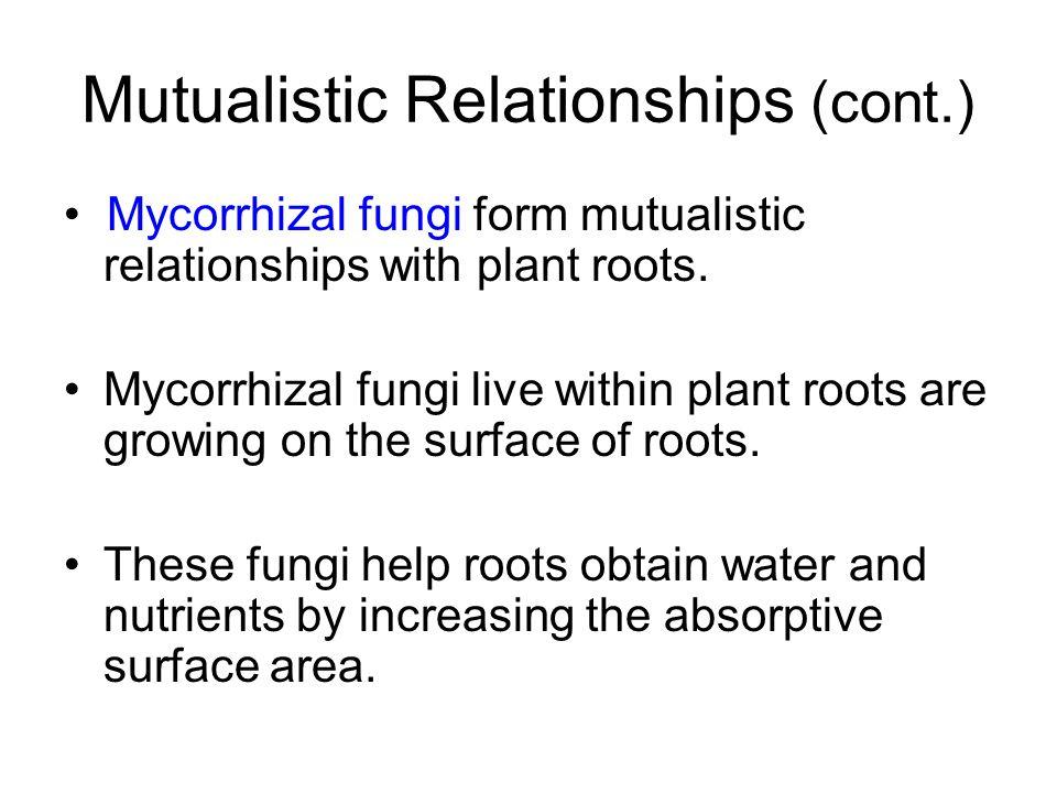 Mutualistic Relationships (cont.) Mycorrhizal fungi form mutualistic relationships with plant roots. Mycorrhizal fungi live within plant roots are gro