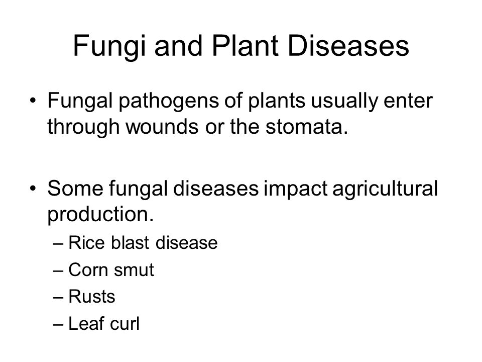 Fungi and Plant Diseases Fungal pathogens of plants usually enter through wounds or the stomata. Some fungal diseases impact agricultural production.