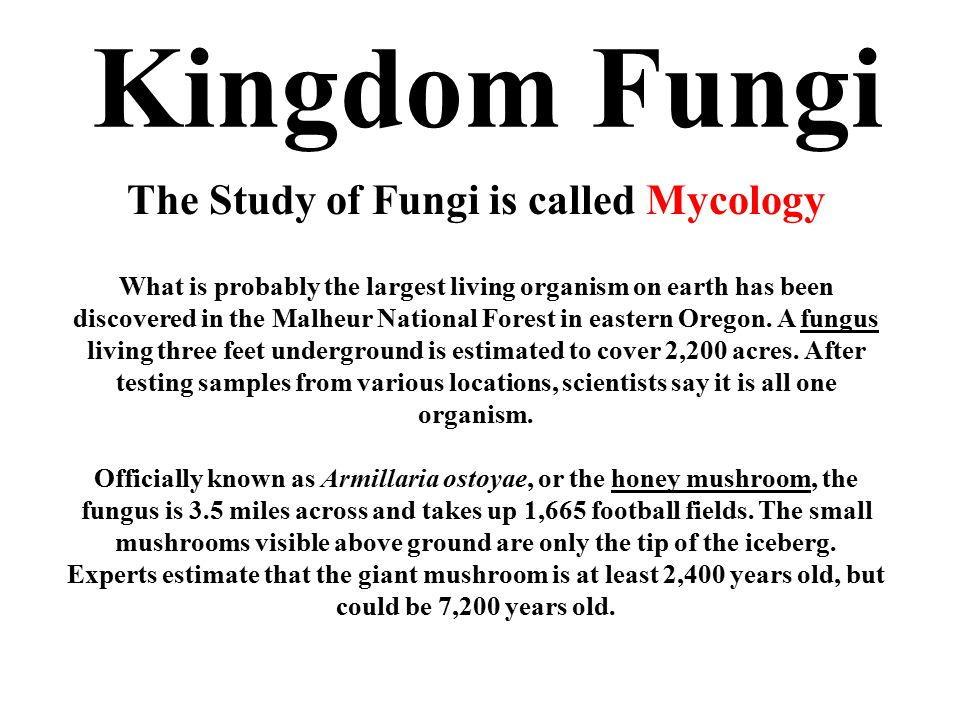 Kingdom Fungi The Study of Fungi is called Mycology What is probably the largest living organism on earth has been discovered in the Malheur National