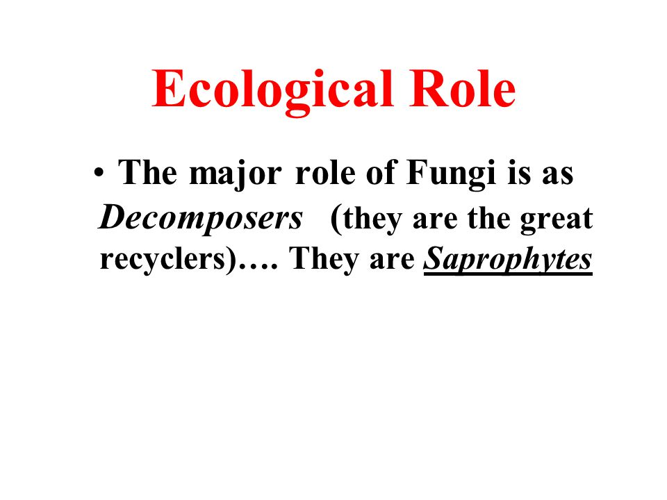 Ecological Role The major role of Fungi is as Decomposers ( they are the great recyclers)…. They are Saprophytes