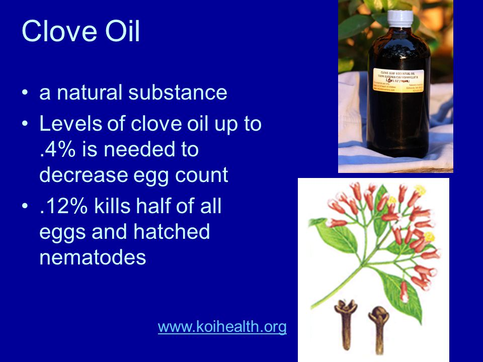 Clove Oil a natural substance Levels of clove oil up to.4% is needed to decrease egg count.12% kills half of all eggs and hatched nematodes www.koihealth.org