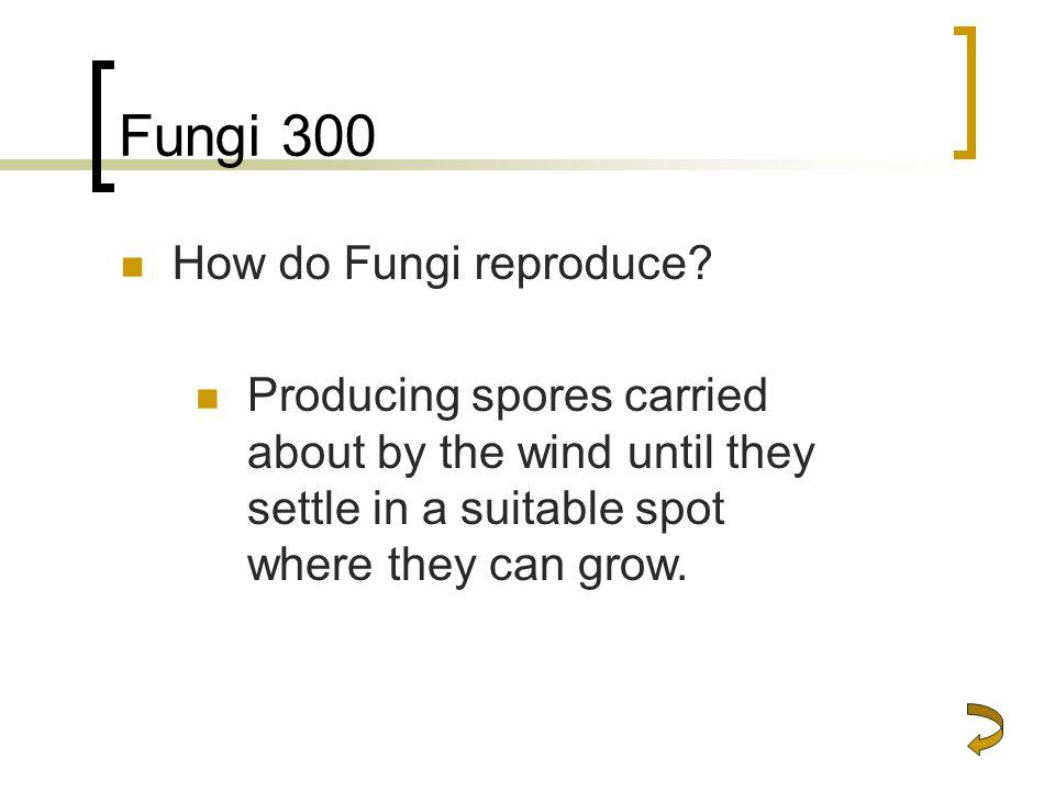 Fungi 300 How do Fungi reproduce.