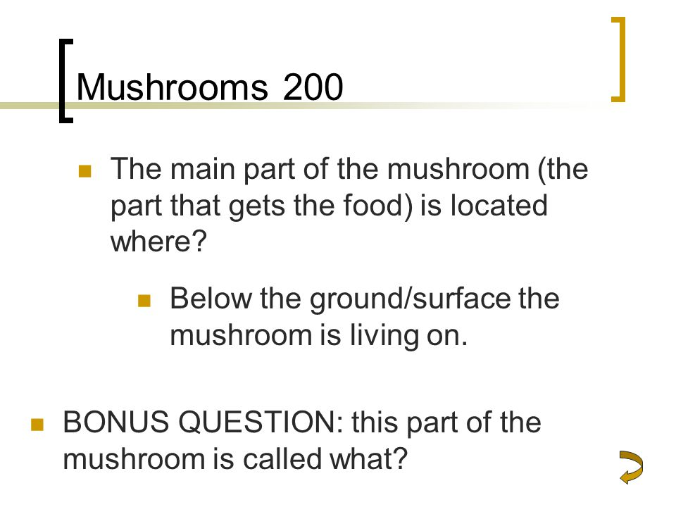 Mushrooms 200 The main part of the mushroom (the part that gets the food) is located where.