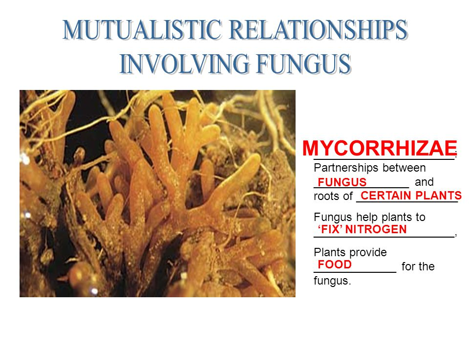 ______________________: Partnerships between _______________ and roots of ________________ Fungus help plants to ______________________, Plants provid