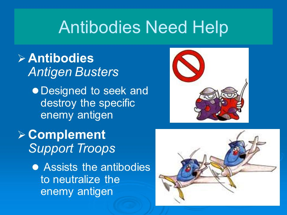   Antibodies Antigen Busters Designed to seek and destroy the specific enemy antigen Antibodies Need Help  Complement Support Troops Assists the an